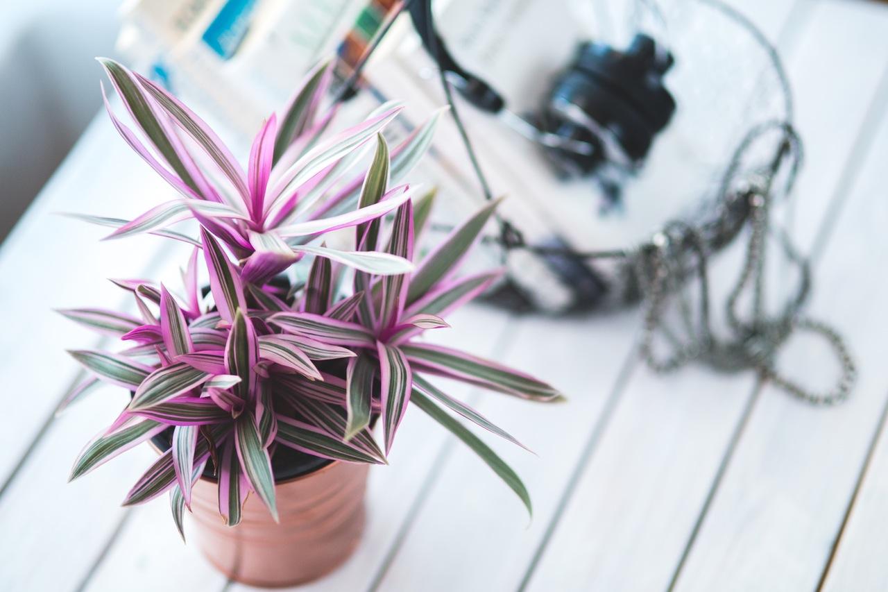nature-house-plant-pot