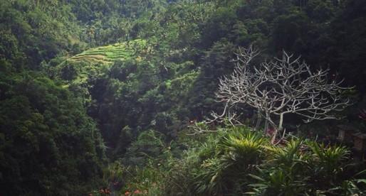 How Cheap is Bali + August Goals