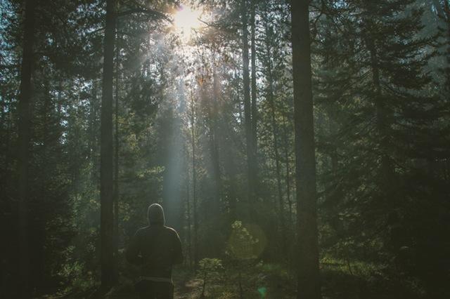 nature-sunny-man-person