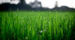 What are the benefits of natural lawn?